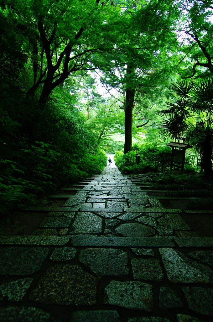 Zuisen-ji, Kamakura, Japan by おおねここねこ on PHOTOHITO