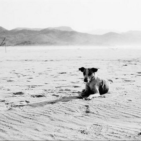 Ah to be a dog on this beach on this Monday! Wishing all of you a sunny week! Come check out this print and others like it on eFrame.com #beach #dog #puppy #pup #puppylove #summer #bw #blackandwhite #pets #awesome