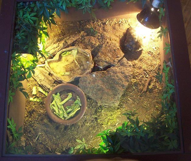 tortue grecque et la tortue de table photos
