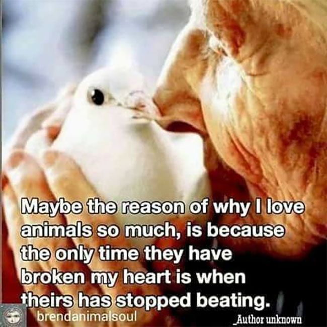 so yeah. Plz stop paying for non-human persons to be enslaved, exploited and murdered. And vegetarians: Their fetuses belong to them, their breast milk belongs to them and their babies. Not you. If you genuinely love animals, prove it: #goVEGAN  Remove yourself from the VIOLENCE