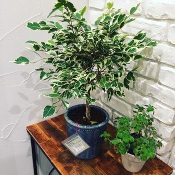 運気もアップ?!風水で考える観葉植物の配置場所とおすすめの種類