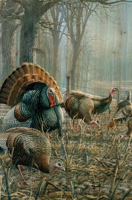turkeys....