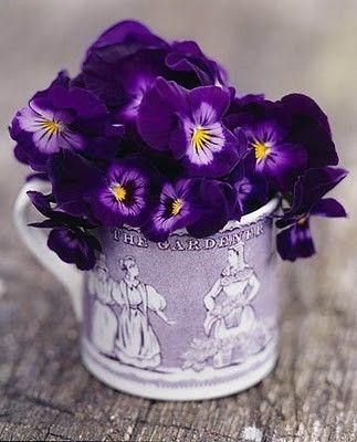 Violet Colored Pansies