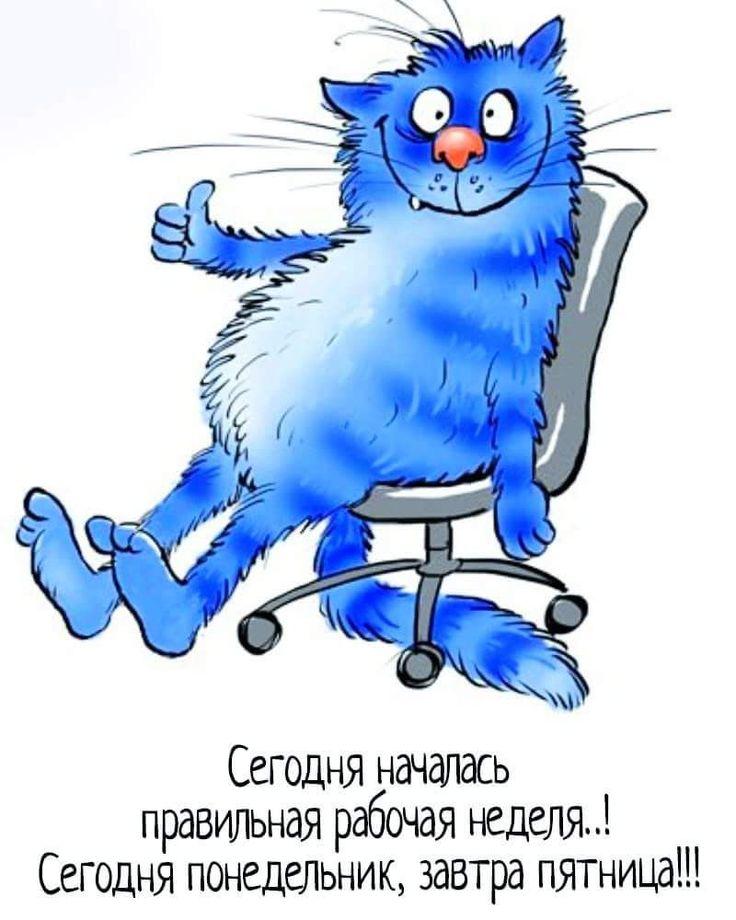 Картинки котиков, приколы с неделями в картинках