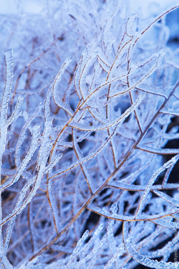 Branches in ice by Mark Sivak on 500px