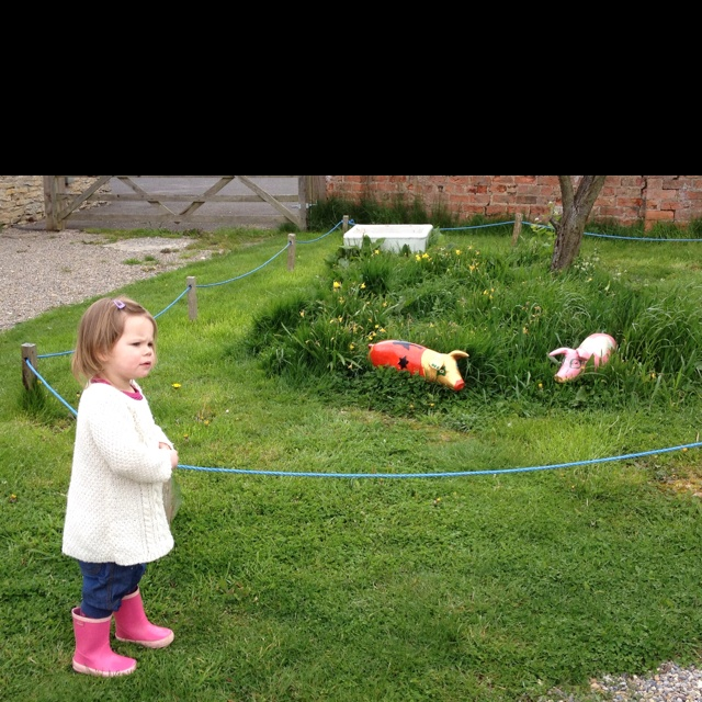 Mini pigs at The Dutch House in Crayke
