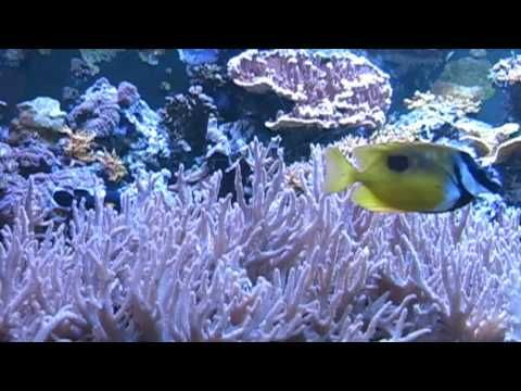 Relaxing Music Therapy - Relaxing Nature Scenes - Relaxing Aquarium (Insomnia…