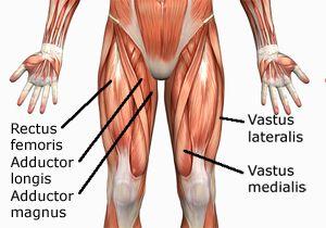 1010-hip-extension-leg-curl | fitness | pinterest | human anatomy, Muscles