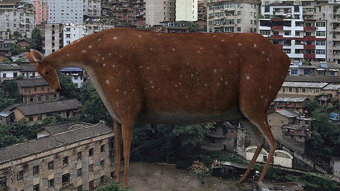 LIU DI http://www.widewalls.ch/artist/liu-di/ #contemporary #digital  #art #photography #surrealism