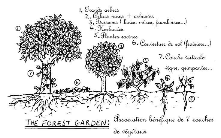 Selon l'espagnol Juan Anton Mora, les forêts comestibles sont la clé de notre future indépendance alimentaire. Principe issu de la permaculture, ce concept permet de produire beaucoup, sans effort et avec peu de place.