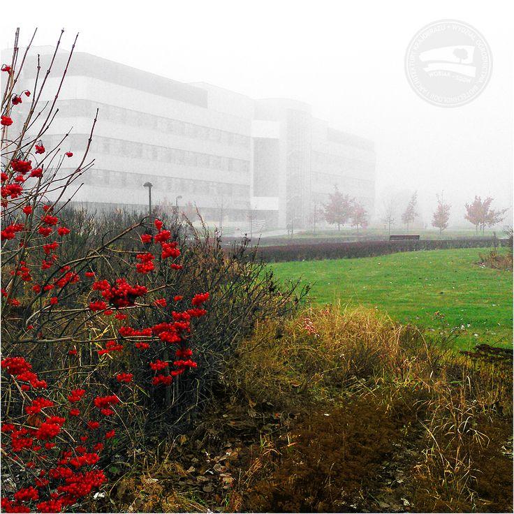 #budynek37 we mgle #wobiak #sggw ☁ #building37 in the fog #wuls