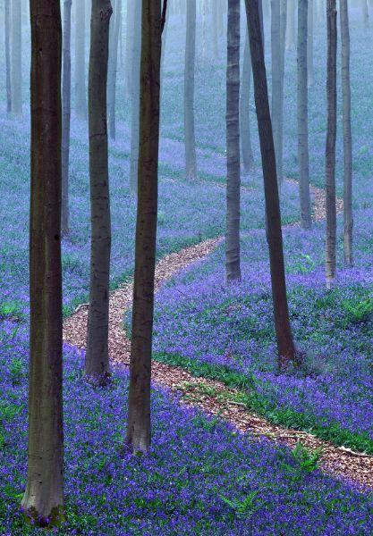 THE BLUE FOREST by Kilian Schönberger, via Behance