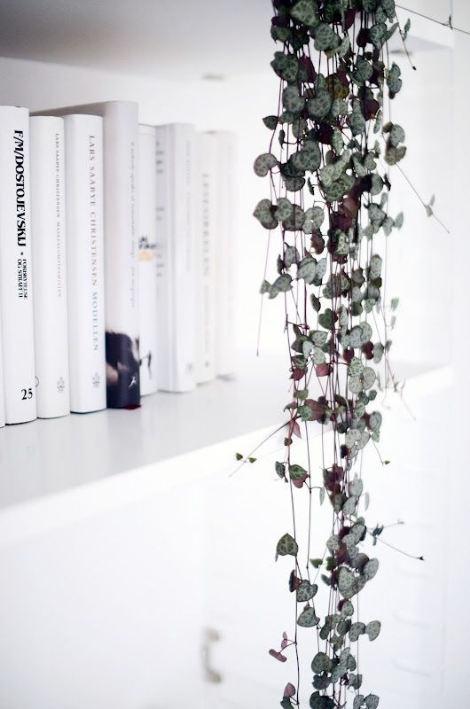 Botanisch wonen Zen Lifestyle