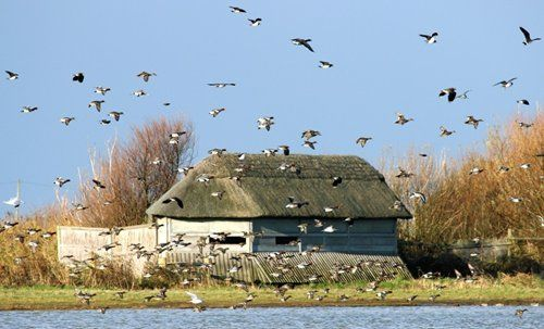 Cley Marshes - Norfolk Wildlife Trust. 9.5 miles / 21 mins east. Open daily 10am-5pm