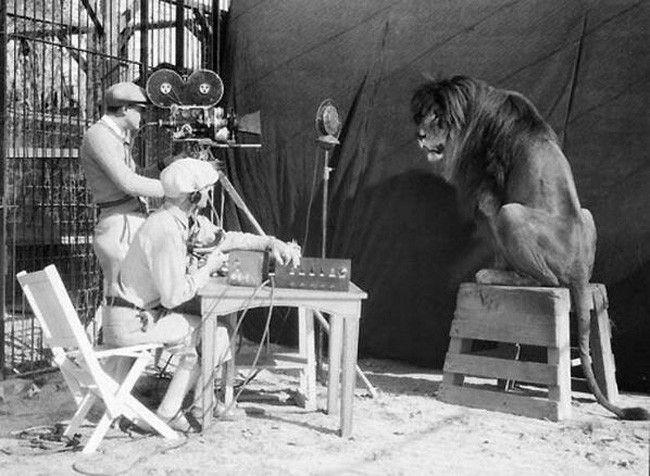 enregistrement lion mgm