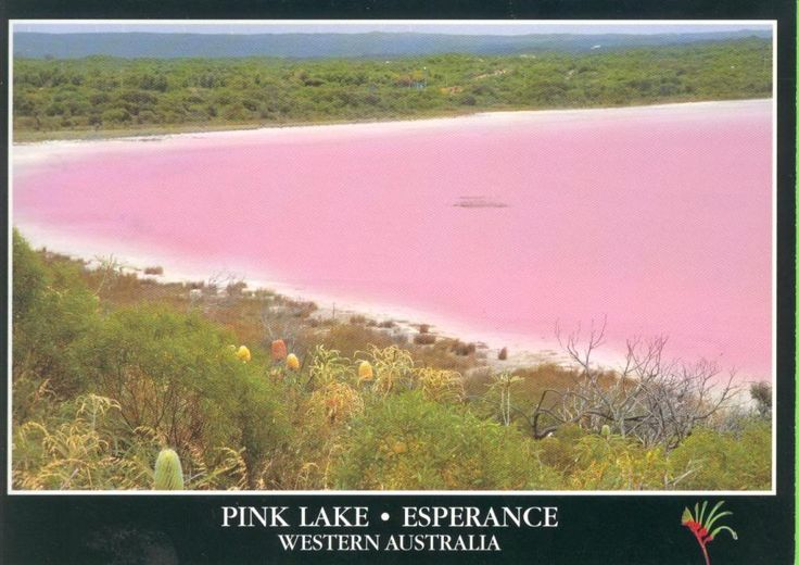 Pink lake in Esperance, Australia - now part of my bucket list of places to go