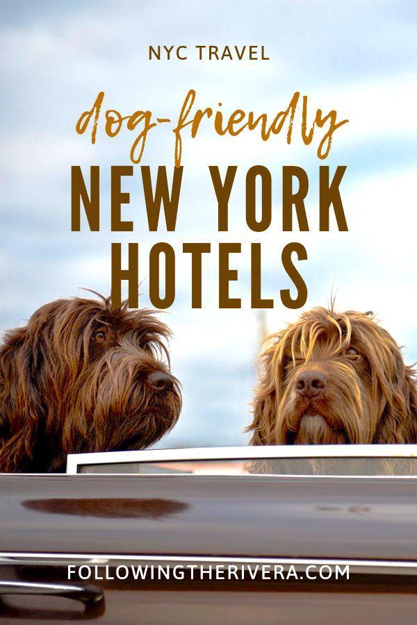 Dog Friendly Hotels Nyc 1 Sensational Boutique In Soho Dog