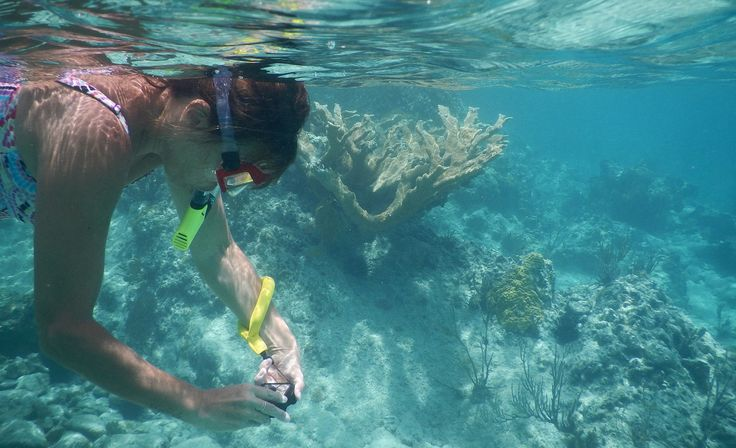 Looking for an inexpensive waterproof camera for your next beach holiday? Explore the underwater world with these good but cheap cameras.
