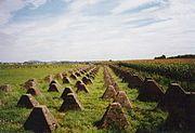 Siegfried Line - Wikipedia, Tank barriers on the siegfried line.Type 39 barrier with 5 teeth.