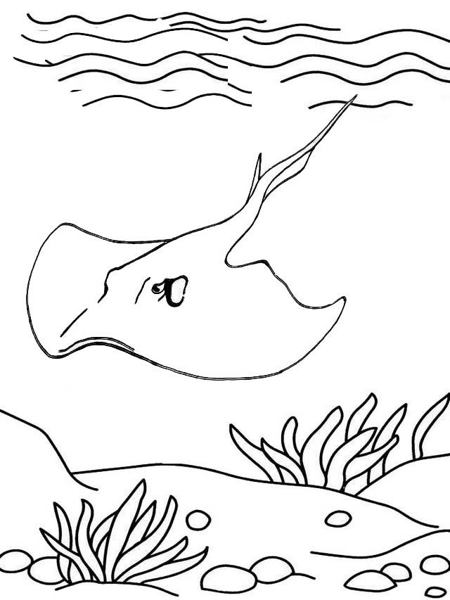 Epic Stingray Sea Animal Ray Coloring Page For Kid Coloring Pages For Kids Coloring Pages Animal Coloring Pages