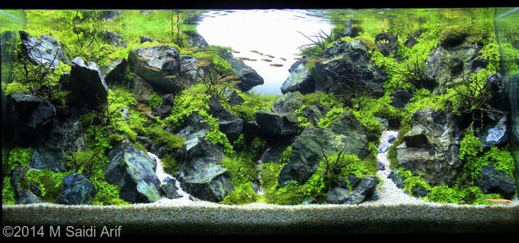 1000 images about aquascaping on pinterest terrace forests and power led - Gambar aquascape ...