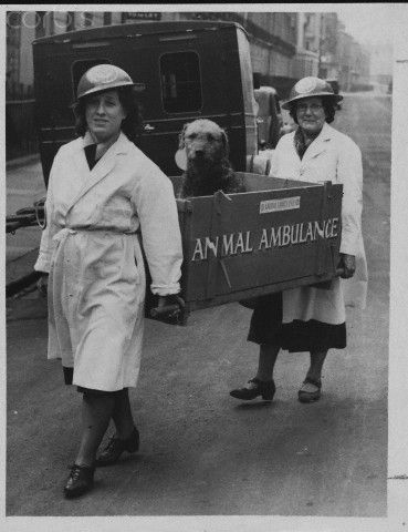 Workers with the National Air Raid Precautions Animal Committee carry an Airedale, injured during an air raid, into an animal hospital. England, 1940.
