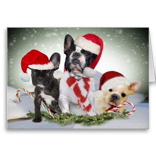 21 best french bulldog christmas cards images on pinterest french bulldog let it snow cards m4hsunfo