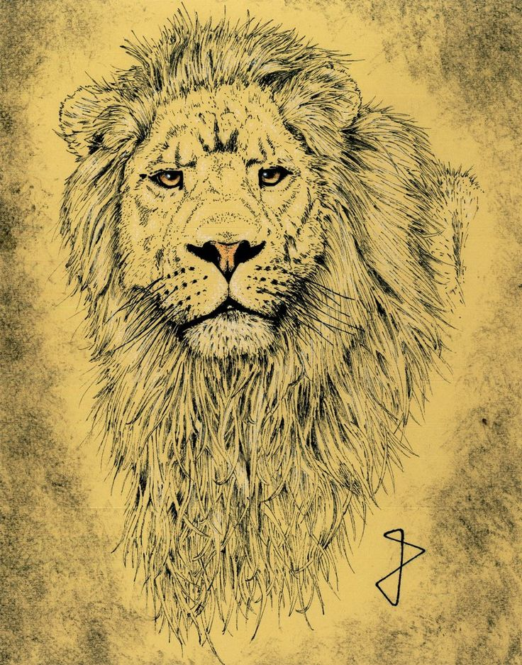 Lion in sephia by Phyreon7