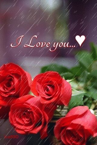 I Love You Love Animated Marriage Relationship Love Quote Gif Soul Mate  Wife Husband Partner Red Rose.