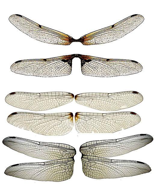 Dragonfly Wings | OOAK Fairy Butterfly Dragonfly Wings | eBay