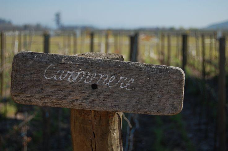Tasty Carmenere wine from Chile Eureka Travel #SouthAmerica