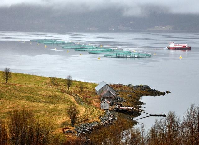 Fish farming in Norway by ystenes, via Flickr