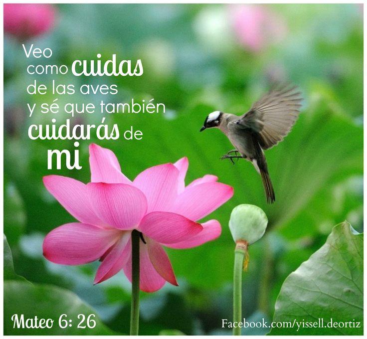 La Biblia: Mateo 6:26