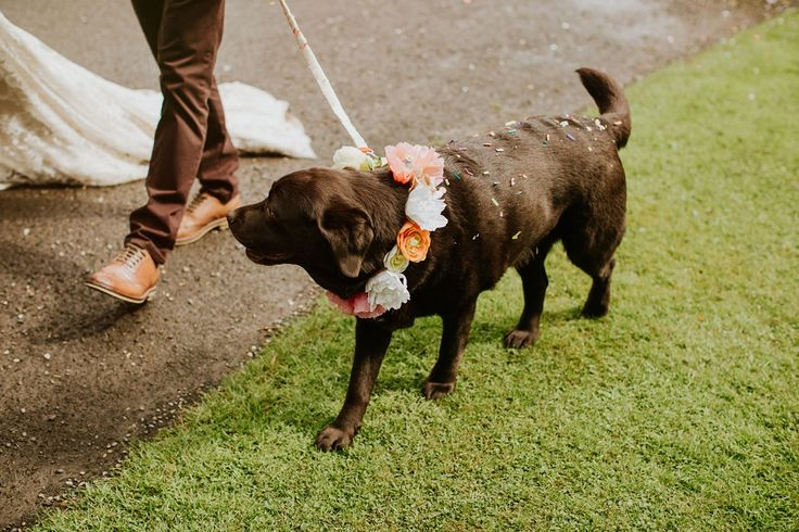 This gorgeous pooch is rocking the flower  This gorgeous pooch is rockin' those flowers - A Colourful and Joy Filled Scottish Handfasting Ceremony. Photography by The Curries