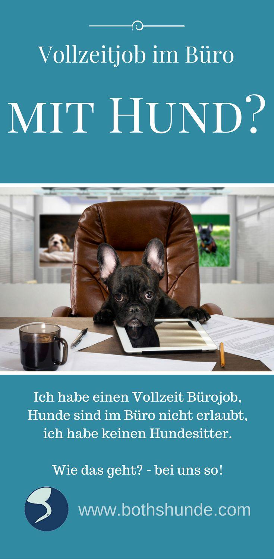 Kann man einen Hund halten auch wenn man einen Vollzeitjob im Büro hat? Welche Möglichkeiten gibt es und was ist gut für Hund und Mensch?
