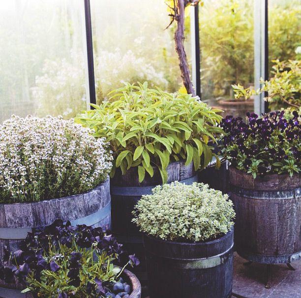 Spices I Zetas Finsmakarens Trädgård