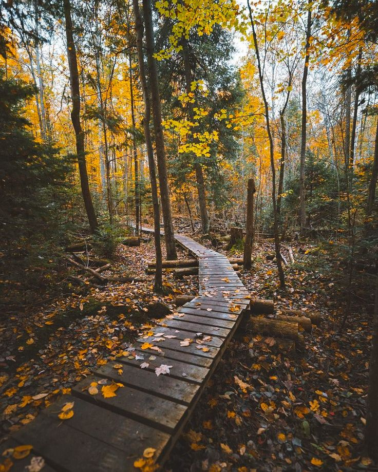 ***Morning hike (York Regional Forest, Ontario) by Darrin (@darrin_stevens) on Instagram