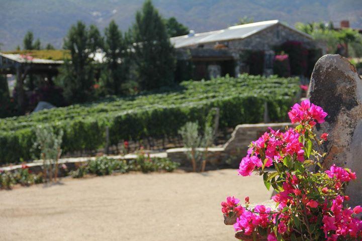 El Rancho - Galería - Viñas de Garza