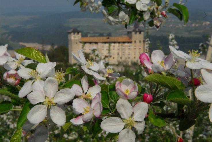 $100 Goditi la #Fioritura dei #meli in in @valdinon sta arrivando mancano pochi giorni!