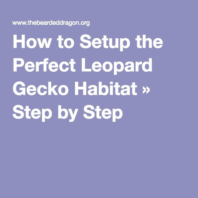 How to Setup the Perfect Leopard Gecko Habitat » Step by Step