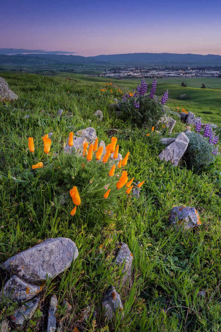 Brushy Peak Regional Peak in Livermore, CA is in the East Bay area region of the San Francisco Bay area. | Micah Burke on 500px