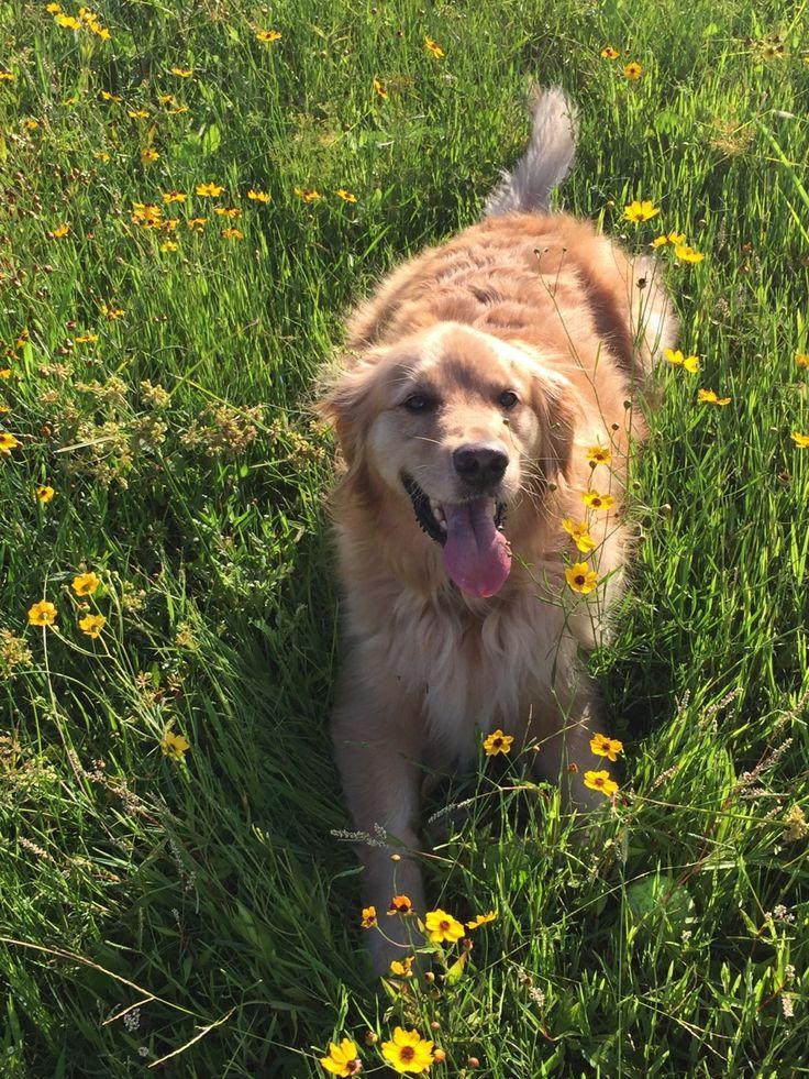 how to teach a dog pretty