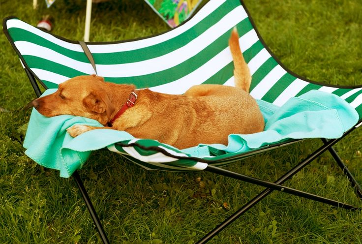 The website is about taking a dog on camping trips. I think my dogs would love this!