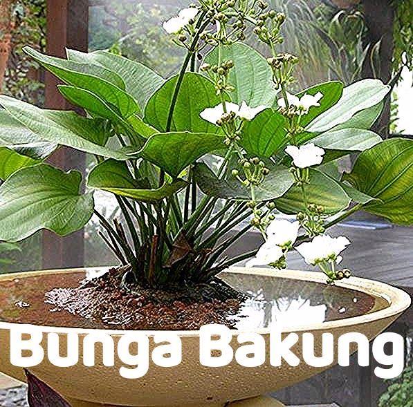 Gambar Bunga Dalam Pot Besar Tips Mewarnai Gambar Bunga Dalam Pot 10 Jenis Tanaman Bunga Hias Dalam Pot 36 Macam Tanaman Hi In 2020 Plants Flowers Spring Outdoor
