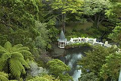 Wellington Botanic Garden-North Island