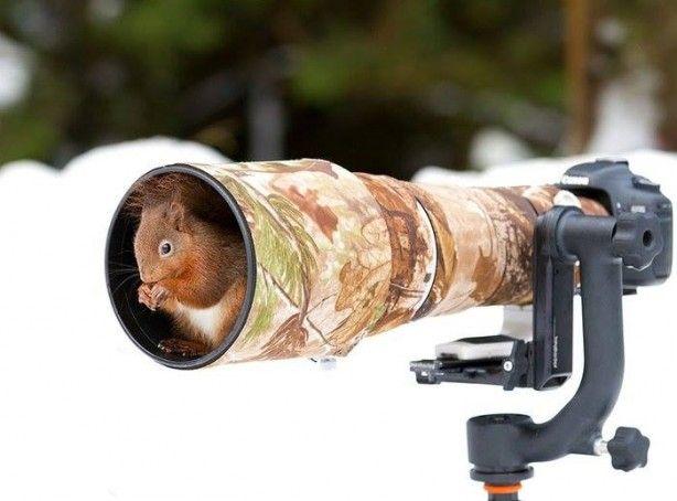 Vahşi doğa fotoğrafçılığı, fotoğraf sanatının en zorlu altdisiplinlerinden birisi.
