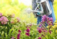 Правила полива в цветнике - Сад и огород