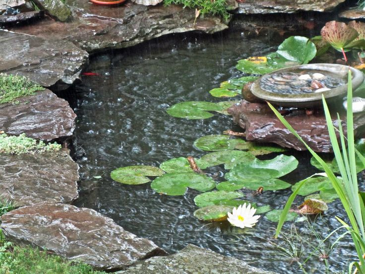 435 best small garden ponds images on pinterest small for Small backyard fish ponds