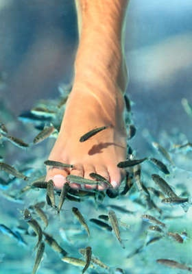 Even though this would be so weird and gross.... I kind of want one of these fish pedicures......