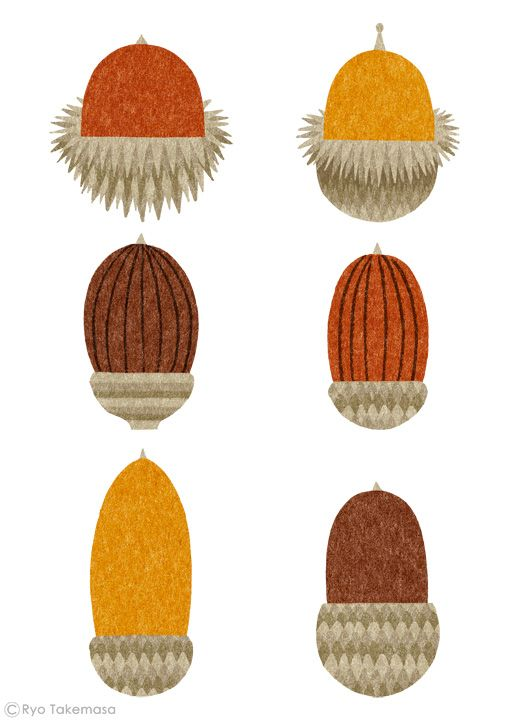 acorns // illustration Ryo Takemasa